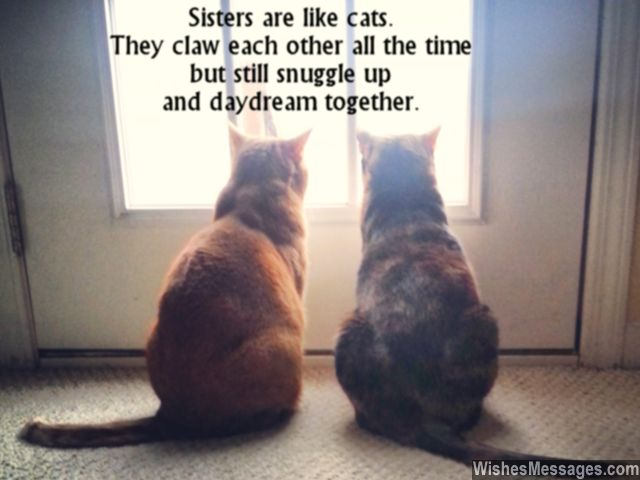 Cute sister's day greeting card quote about sisters being cats