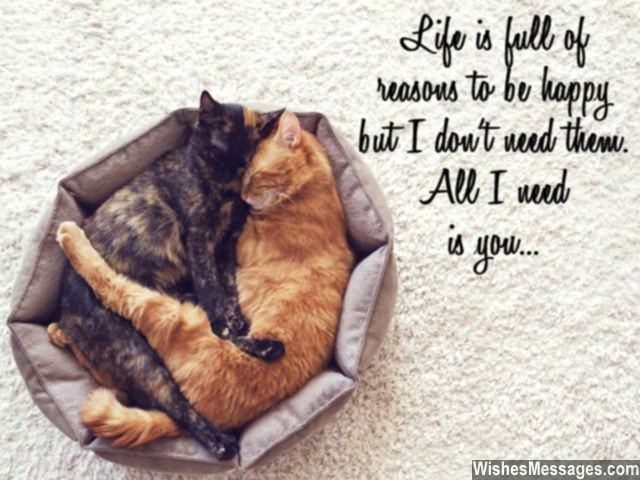 Cute love quote with cats all I need in my life is you