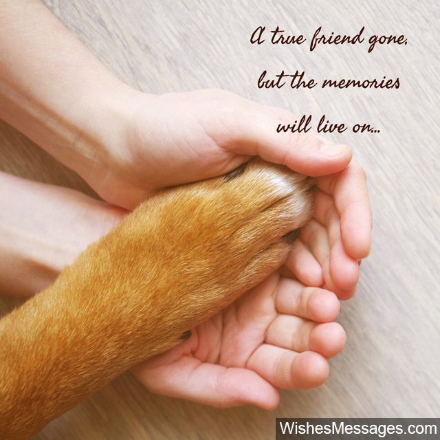 Sympathy Dog Quotes: Sympathy Messages For Pets: Condolence Quotes For Dogs