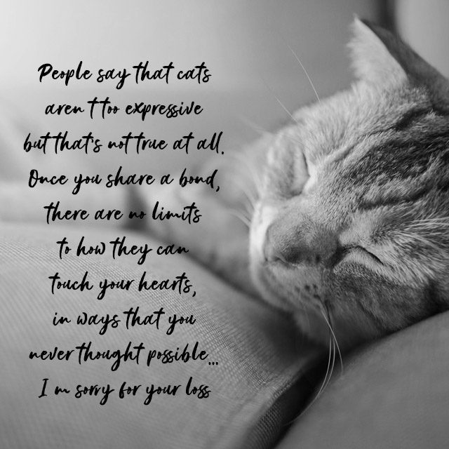 Sympathy Messages for Pets: Condolence Quotes for Dogs, Cats ...